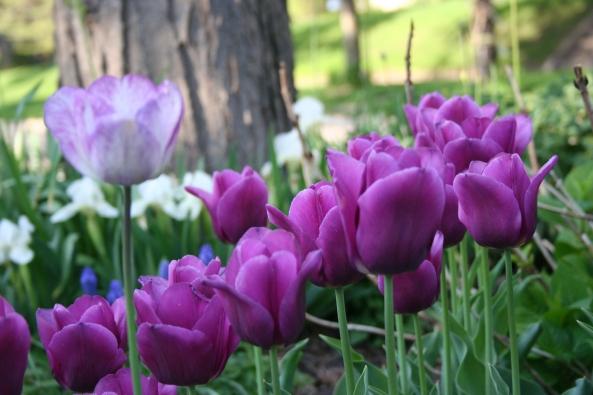 Spring 09 (20)