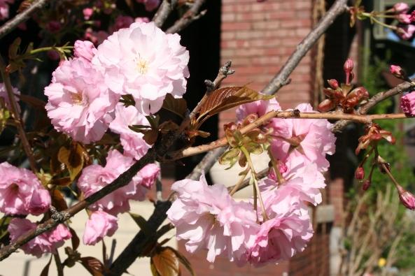 Spring 09 (5)